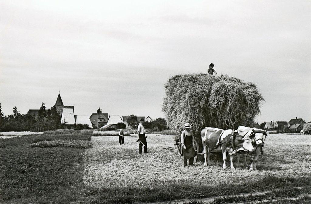 So sah die Getreideernte im Jahr 1946 auf einem Feld bei Nellingen aus. Im Hintergrund ist der Klosterhof zu sehen. Foto: Stadtarchiv Ostfildern