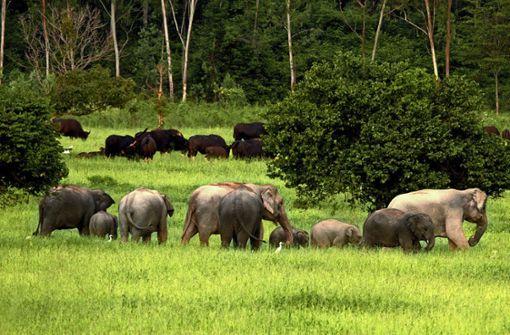 In Stuttgart entsteht ein weltweit einzigartiges Elefantenhaus
