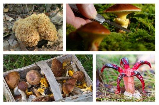 Hut ab: Testen Sie Ihr Pilz-Wissen