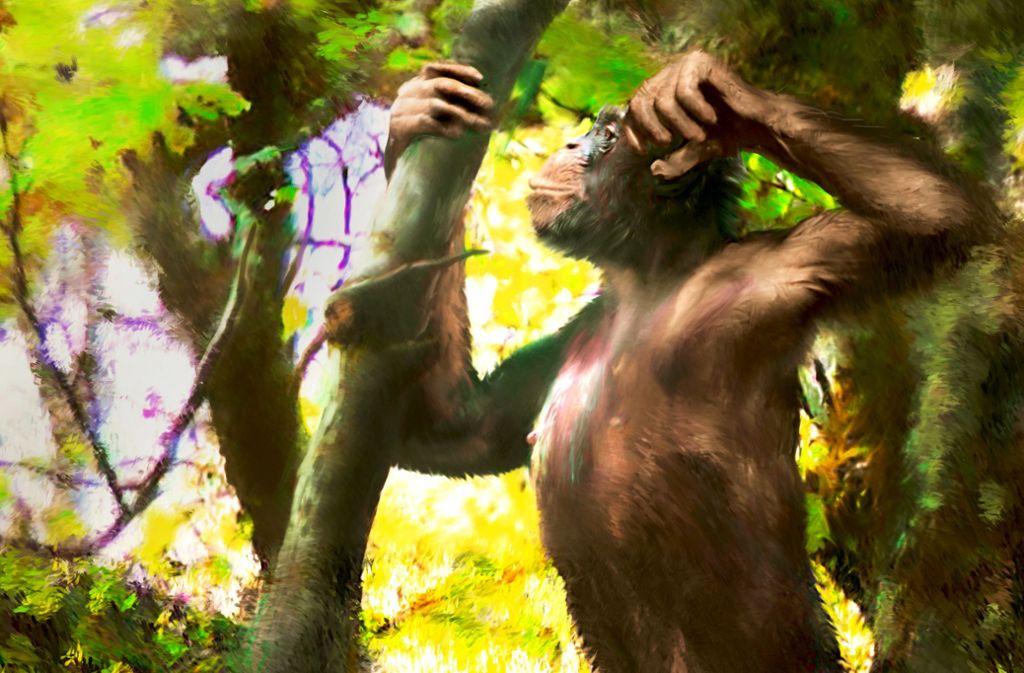 So könnte ein männlicher Danuvius guggenmosi ausgesehen haben: Der Künstler  Velizar Simeonovski hat das Männchen rekonstruiert. Foto: Velizar Simeonovski