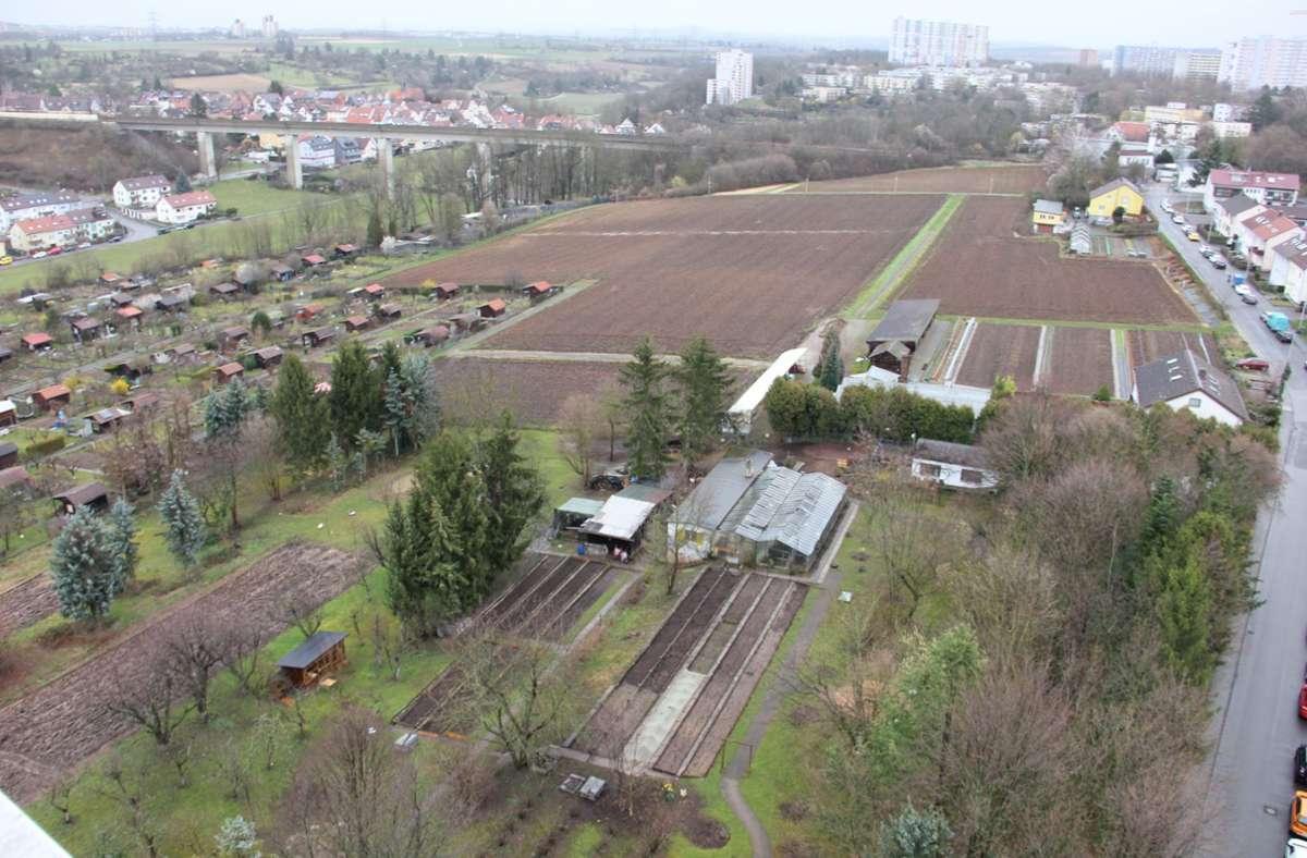 Nördlich der Böckinger Straße (rechts) möchte die SWSG 360 Wohnungen bauen, der IGH-Garten soll größtenteils erhalten bleiben. Foto: /Bernd Zeyer