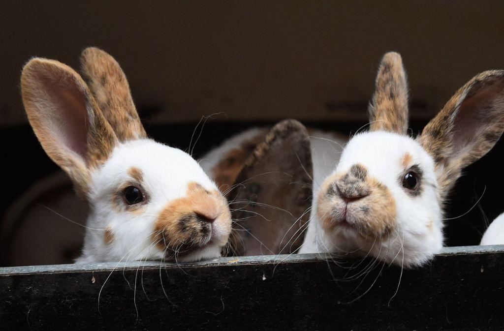 Kaninchen benötigen jetzt dringend eine kühle Umgebung Foto: dpa