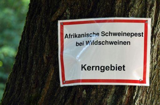 Weitere Wildschweine in Brandenburg positiv getestet