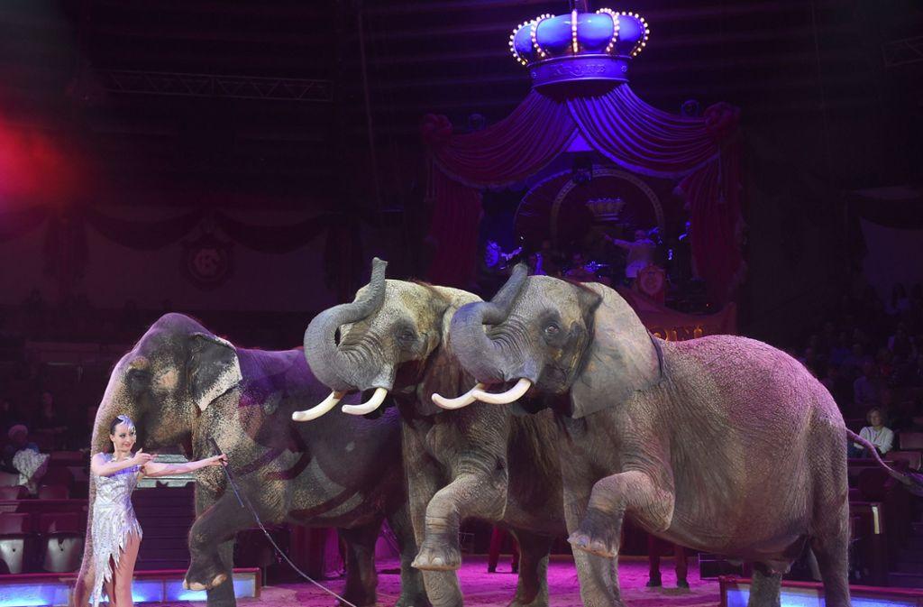 So kennt man den Circus Krone: Großer Rahmen, große Tiere Foto: dpa/Felix Hörhager