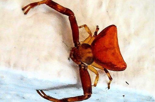 Kleine Großstadt-Spinnen im Überlebenskampf