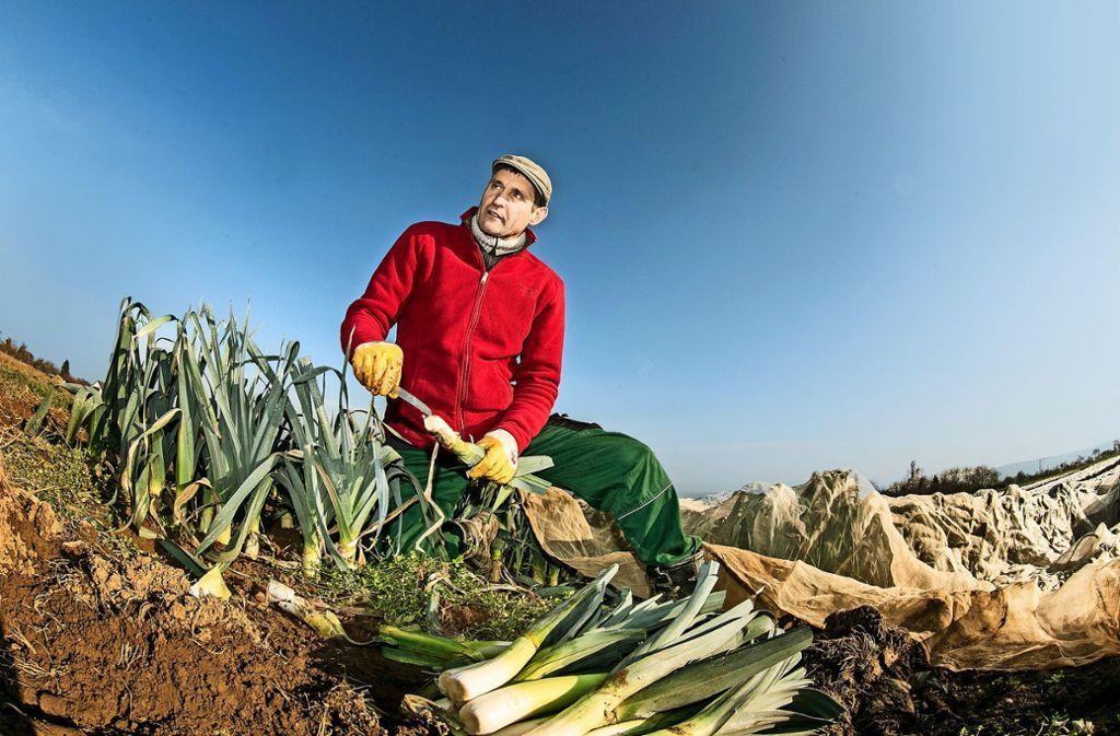 Der Bioland-Bauer Jörg Hörz pflanzt auf einem Zehntel seiner Äcker Lauch an. Jahrelang hat die Minierfliege seine Erträge schrumpfen lassen. Foto: Horst Rudel