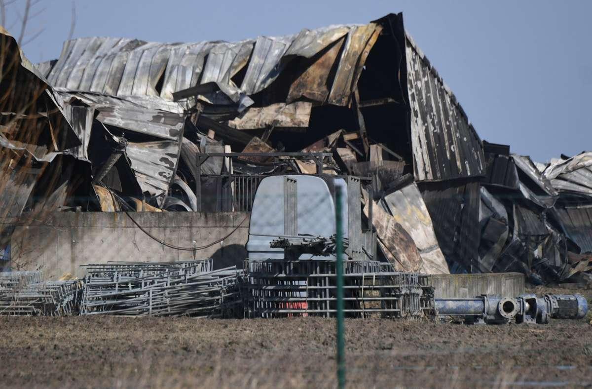 Die Dachkonstruktion eines Gebäudes eines Schweinemastbetriebes liegt nach einem Feuer in Trümmern. In dem Betrieb war es zu einem Großbrand gekommen. Foto: dpa/Stefan Sauer