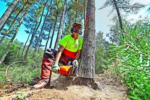 Waldbesucher entsetzt über Forstarbeiten
