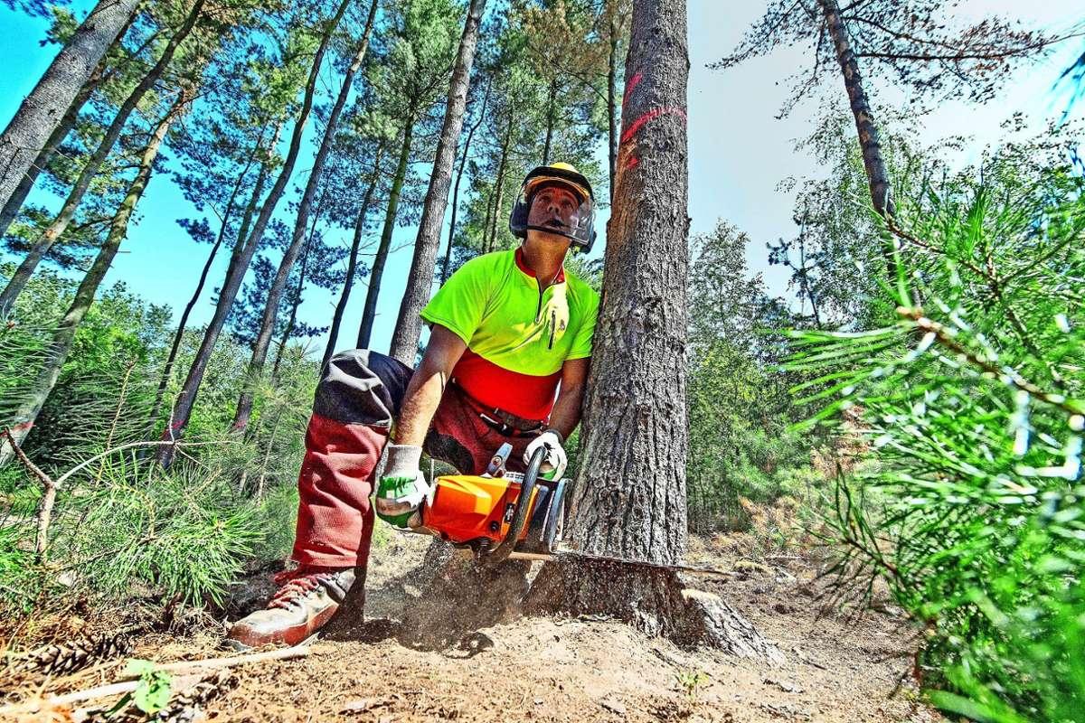 Die Trockenheit setzt den Waldbäumen zunehmend zu. Foto: dpa/Boris Roessler