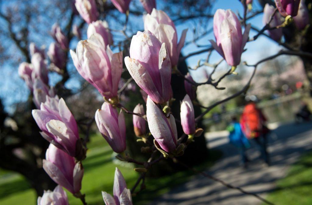 Im Frühling ändert sich nicht nur die Natur, auch die Stuttgart scheinen plötzlich anders zu ticken. Foto: