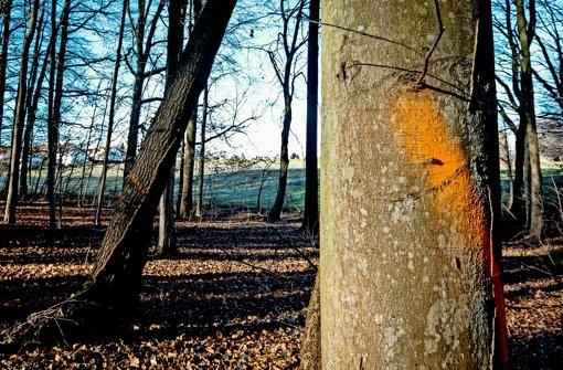 Die Markierung bedeutet nichts Gutes für die Hochberger  Bäume. Foto: factum/Granville