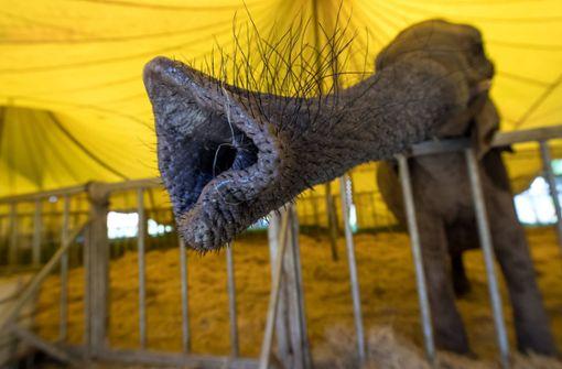 Elefanten müssen draußen bleiben