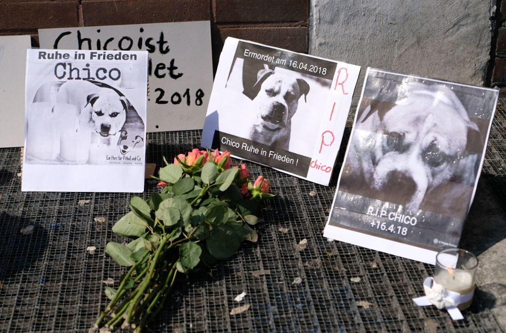 Die Teilnehmer der Mahnwache legten Blumen, Kerzen und Stoffhunde nieder. Foto: dpa