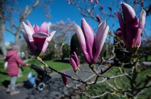 Der Frühling kommt zurück