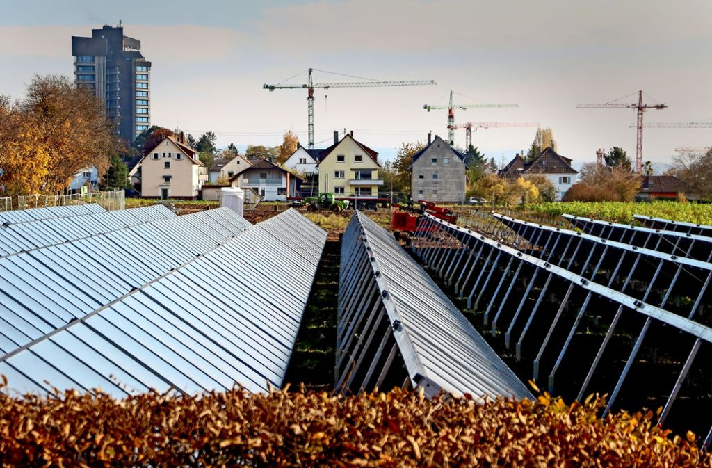 Die Solarkollektoren im Herbstlaub: Hier entsteht die größte Anlage in Deutschland. Foto: factum/Simon Granville