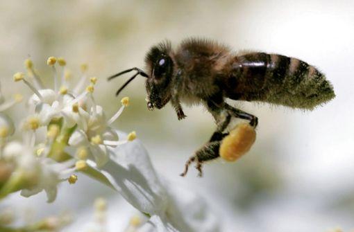 Tipps für einen Garten, an dem sich auch Insekten freuen