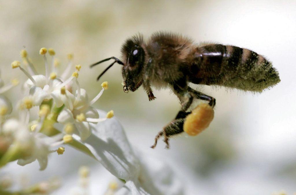 Um Insekten einen guten Lebensraum zu schaffen, können für den Gärtner einige Tipps hilfreich sein. Foto: dpa