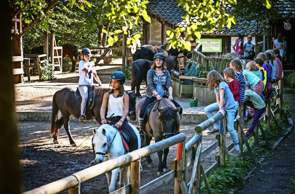 Die Jugendfarm im Elsental hat eine 100-Prozent-Stelle zusätzlich bekommen. Auch die Farm in Möhringen und der Abi in Vaihingen wünschen sich mehr Geld. Foto: lg/ Zweygarth