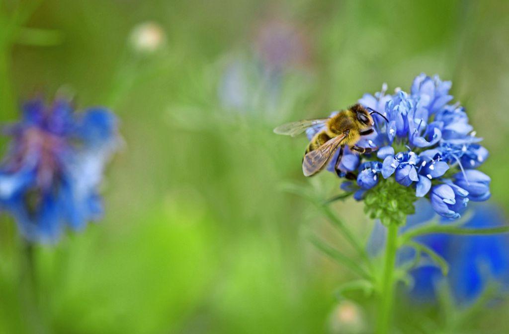 Ein Plätzchen für jede Biene: In steinbelegten Vorgärten gibt es die nicht mehr. Foto: Lichtgut/Max Kovalenko