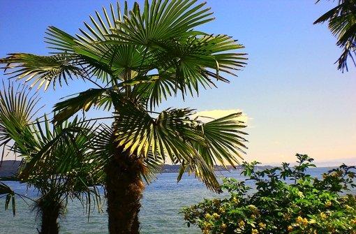 Erderwärmung: Pflanzen, die in unseren Breitengraden bisher allenfalls auf der Insel Mainau gedeihen, könnten bald auch in Stuttgart heimisch werden. Foto: Bodensee-Tourismus