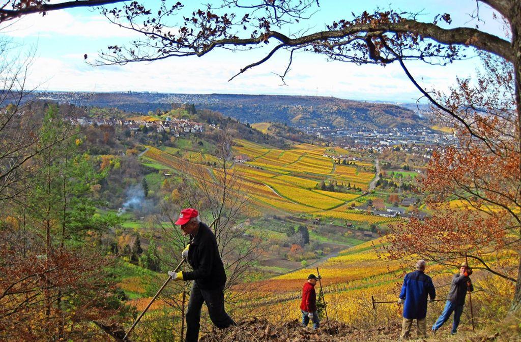 """Die Ortsgruppe Fellbach des Schwäbischen Albvereins kümmert sich auch um die Pflege des Naturschutzgebiets """"Hinterer Berg"""" auf dem Kappelberg. Foto: Privat"""
