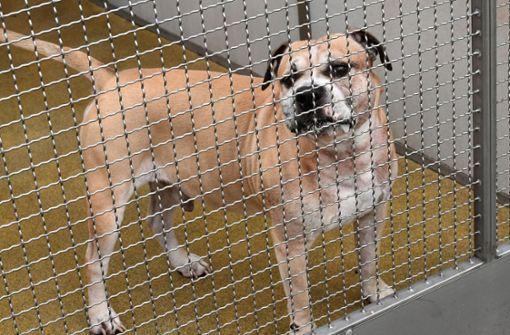 Unbekannte wollen in Hundezwinger einbrechen