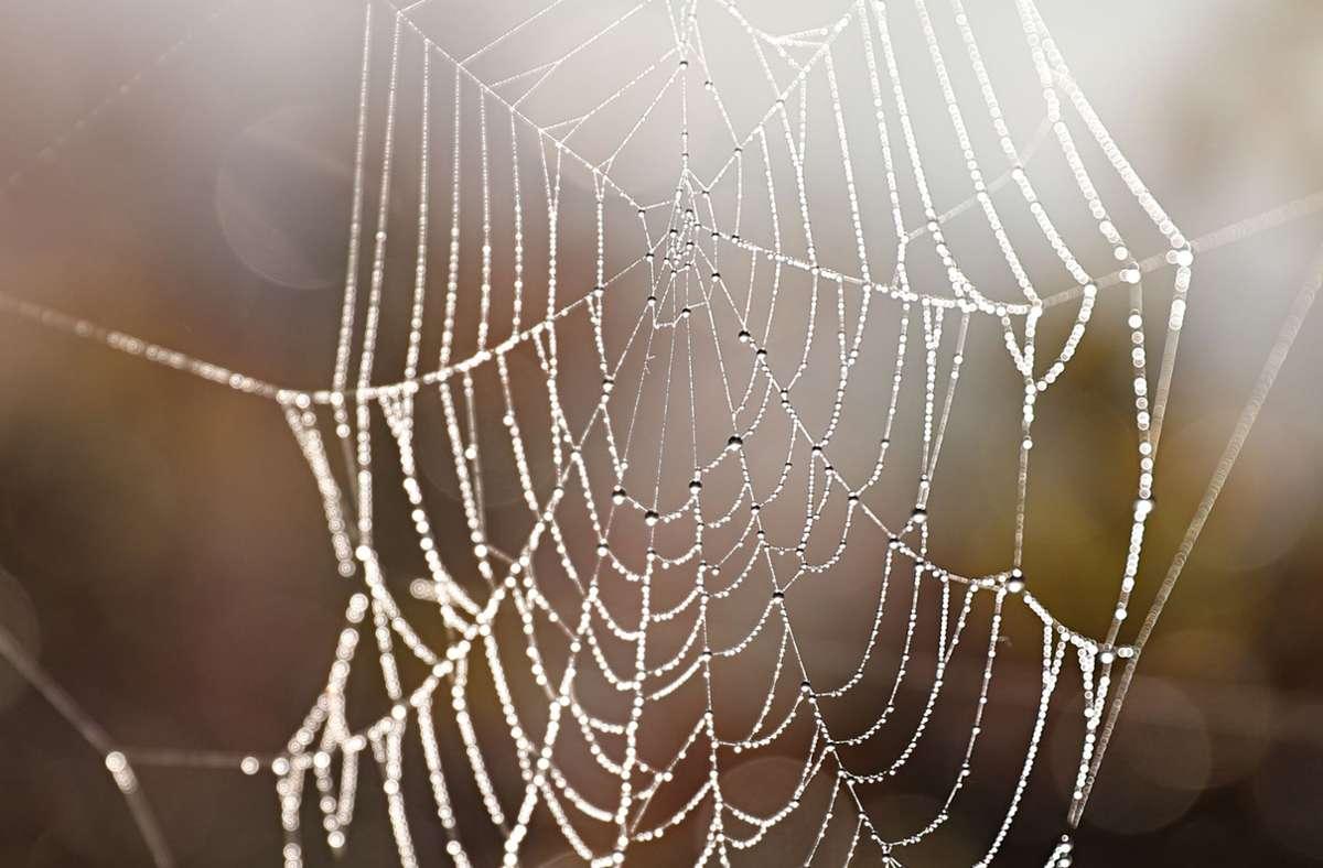Bei Recherchen zum Thema Spinnenseide hat Charlotte Hopfe eine neue Spinnenart entdeckt. Foto: dpa/Franziska Kraufmann