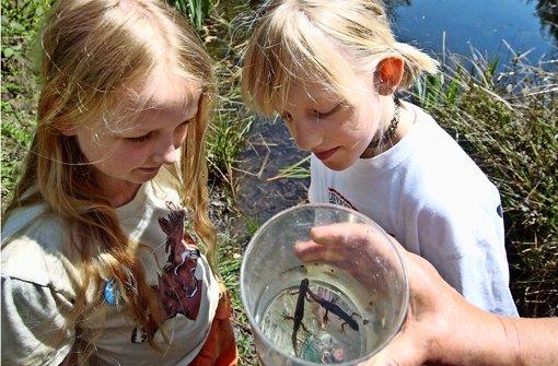 Kinder entdecken Biotope vor ihrer Haustür