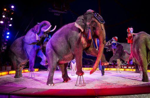 Opposition fordert  Wildtierverbot im Zirkus