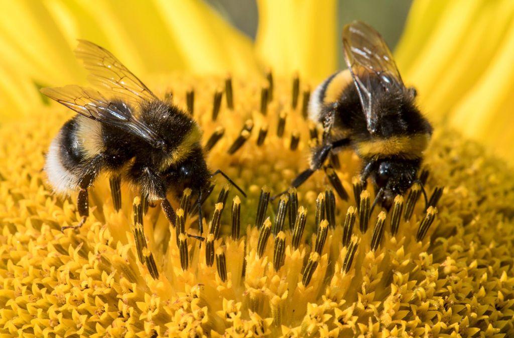 Pestizide, Urbanisierung und Klimawandel machen Insekten schwer zu schaffen. Foto: dpa