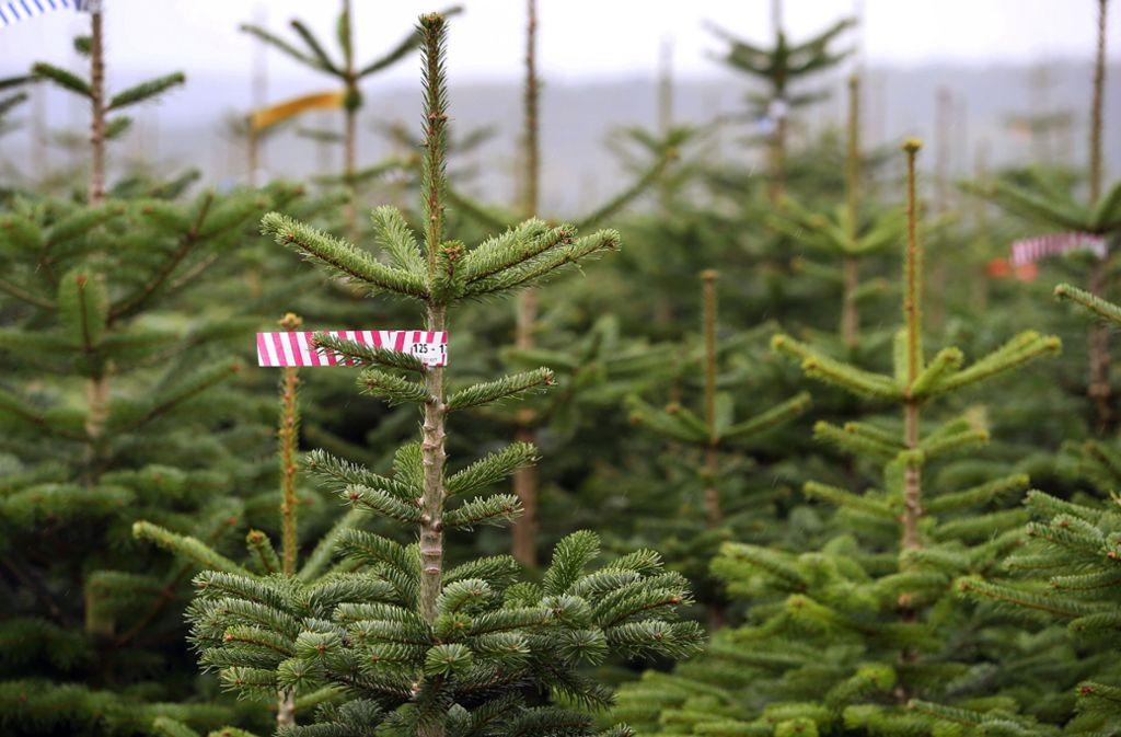 In Baden-Württemberg werden den Angaben zufolge 2,5 Millionen Bäume pro Jahr verkauft. Foto: dpa