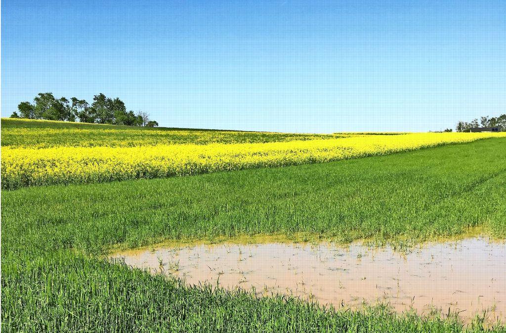 Wo sich auf dem Bild noch Wasser auf den Feldern sammelt, sollen künftig Häuser entstehen. Foto: Archiv Malte Klein