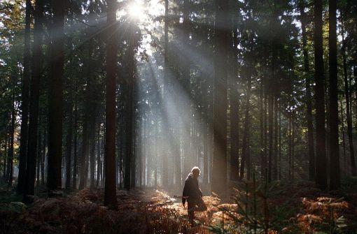 Bezirksbeirat will Wald schützen