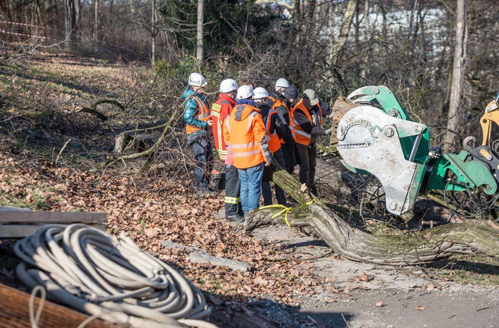 Bei Fällarbeiten von vermeintlich schützenswerten Bäumen im Februar im Rosensteinpark gab es manche Überraschung. Foto: Lichtgut/Julian Rettig