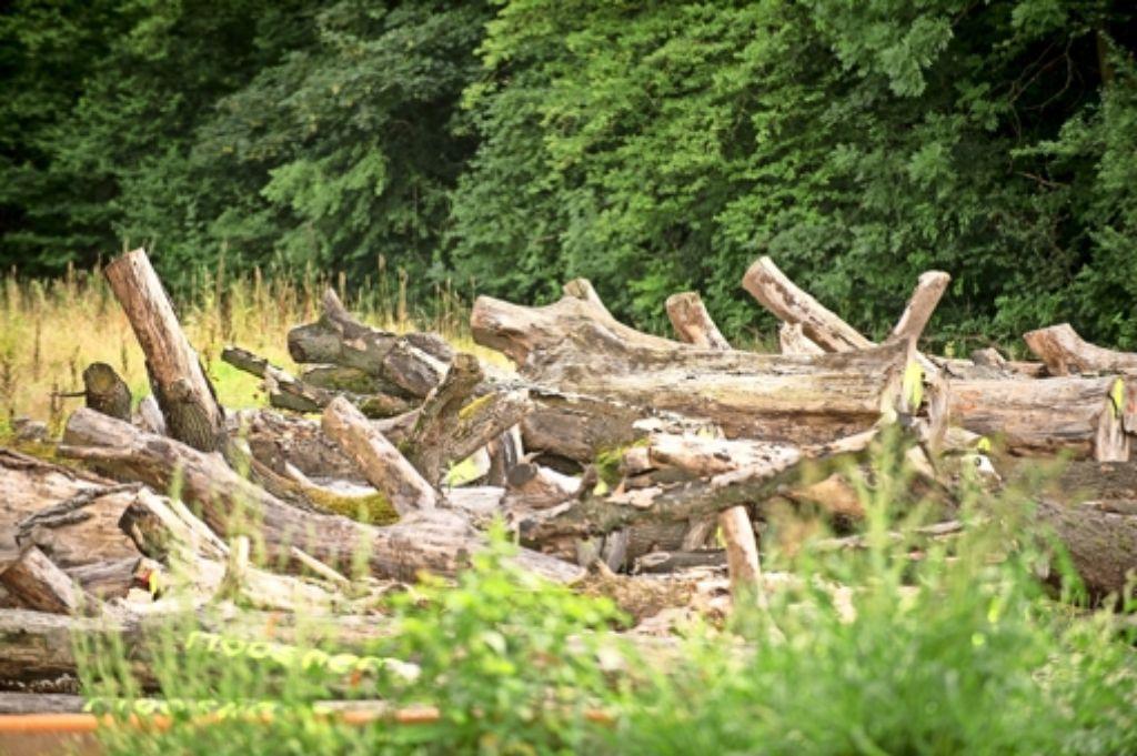 Seit gut zwei Jahren lagern die Stämme im Fasanenhof ungeschützt im Freien. Foto: Stollberg