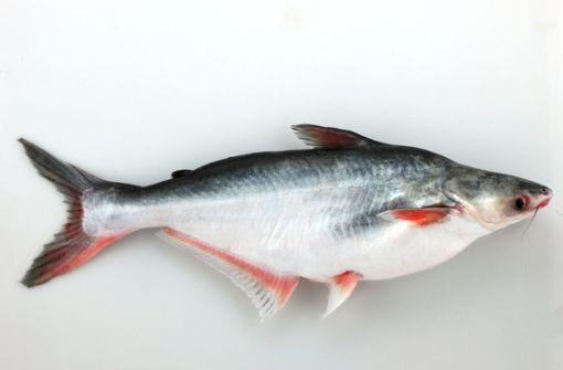 War der Fisch Filet oder nicht?