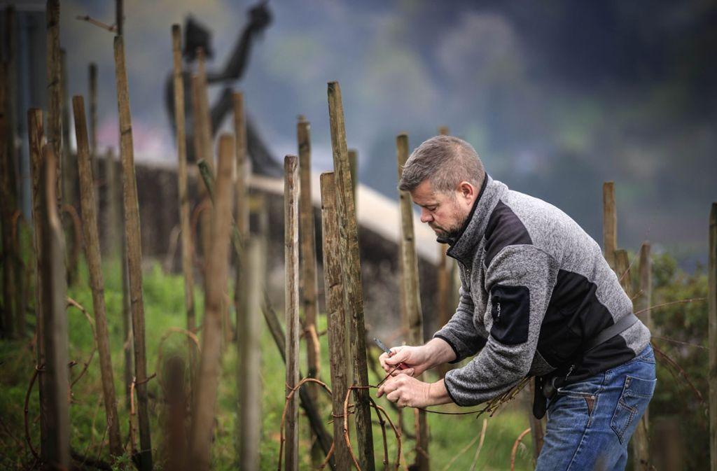 Jochen Beurer  hat  bisher gut 30 historische Sorten angepflanzt, jetzt kommt die  Schwarzsamtene   hinzu. Foto: Gottfried Stoppel