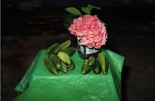 Kunst der Gurke
