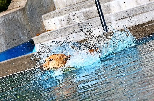 Tierische Bauchplatscher und Wasserpatscher