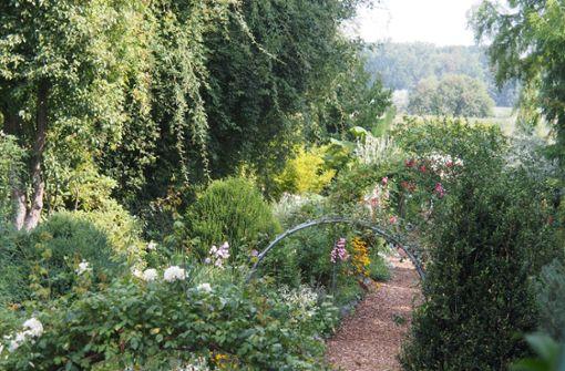 Ein Garten mit Lebkuchenbaum, Kürbis und Lavendel