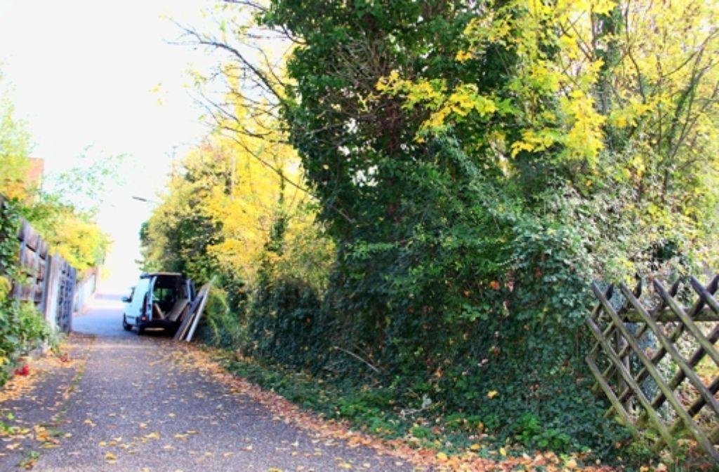 Momentan dürfen die beiden Grundstücke – vom Zaun (rechts) bis hoch zur Kullenbergstraße – nicht bebaut werden. Foto: Torsten Ströbele