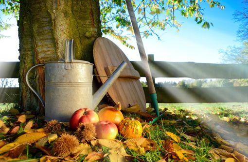 Ist ein Baumfällverbot sinnvoll?