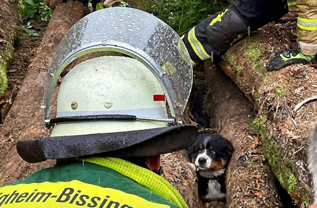 Gefunden: der kleine Abenteurer in misslicher Lage Foto: Freiwillige Feuerwehr Bietigheim-Bissingen/Sven Geiger