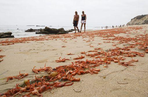 Droht schon 2020 ein  neuer El Niño?