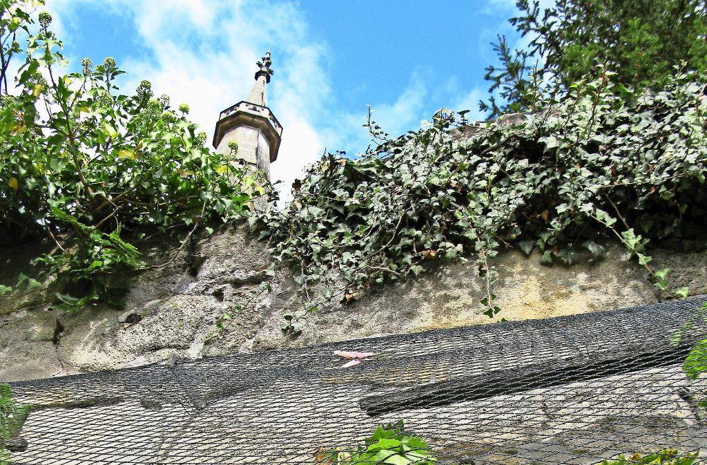 Langsam rankt er zum Sims der Kirchhofmauer: Echterdinger Wein. Foto: Schultheiss