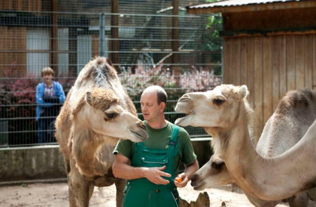 Inmitten seiner Viechla fühlt sich Heiko Eger am wohlsten. Von einigen will er sich über kurz oder lang dennoch trennen. Foto: Rudel