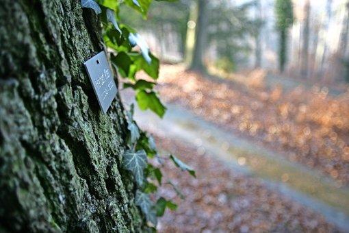 Stadt will neue Baumgräber  schaffen