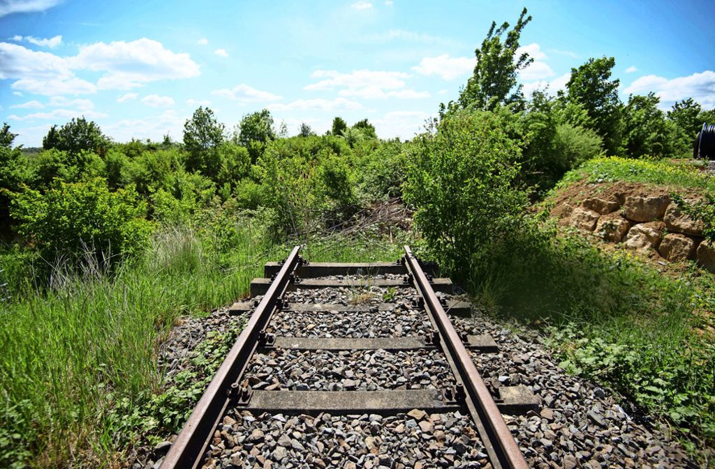 Gebüsch wuchert über alte Bahngleise bei Markgröningen. Foto: picture alliance/dpa/Marijan Murat