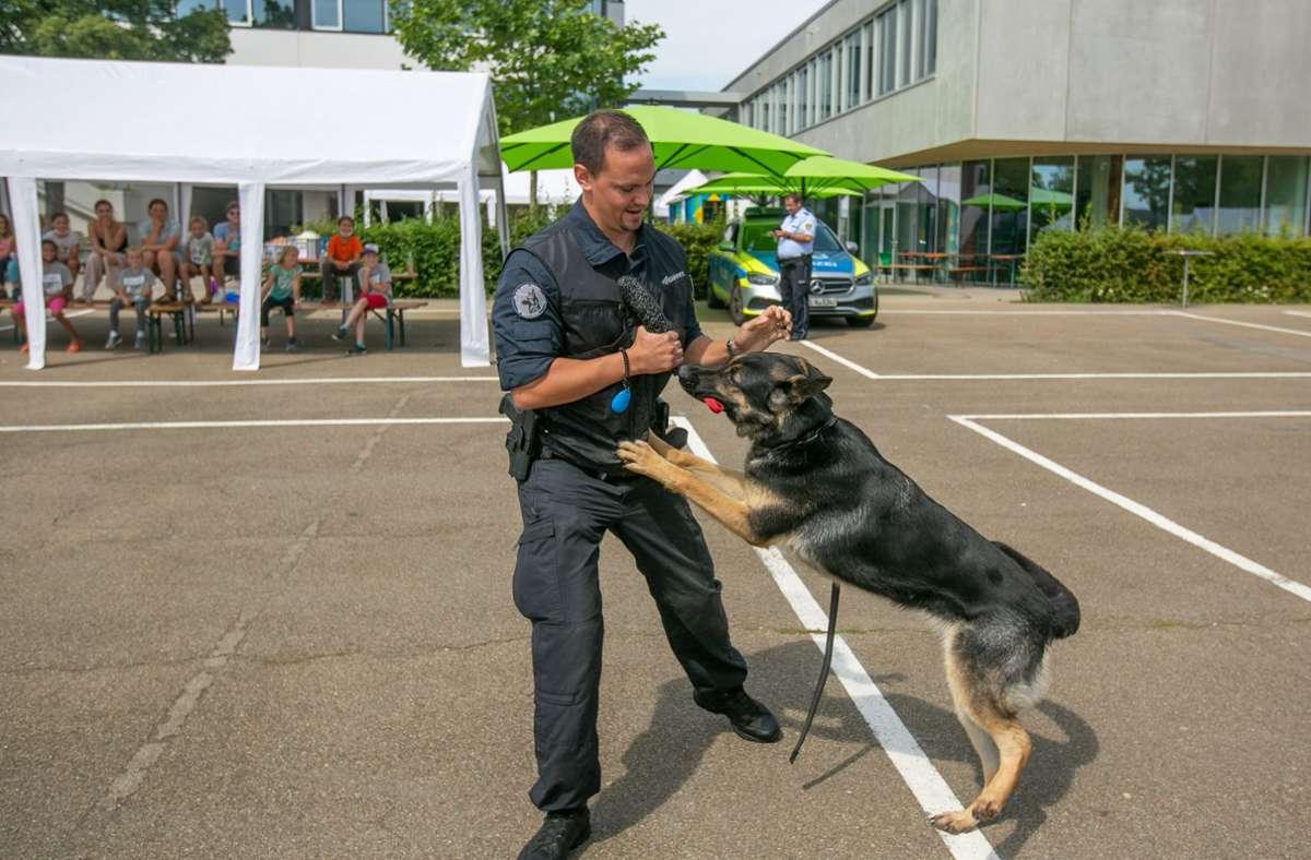 Polizeihündin Mila ist für die Suche nach Drogen ausgebildet worden. Foto: Roberto Bulgrin