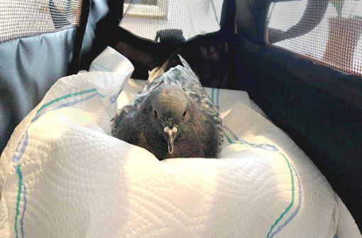 Tierquäler schießt auf Tauben